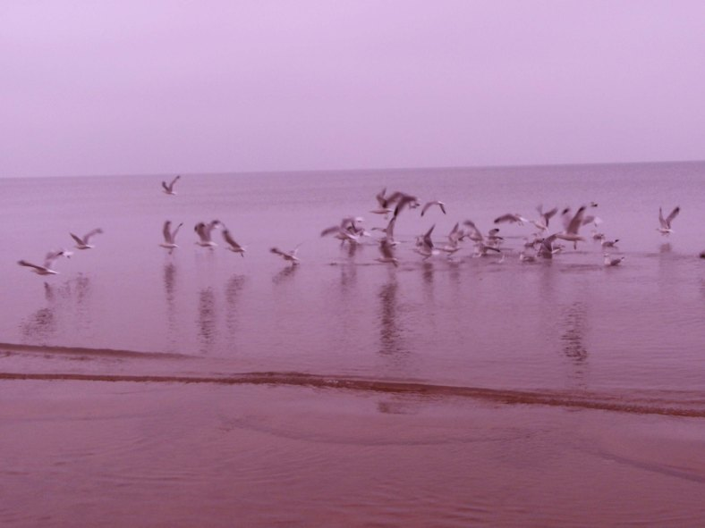 The gulls were very unhappy with me for intruding on their space on the sandbar.